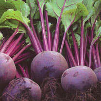 Beetroot (Organic) Seeds - Rhonda