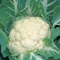 Cauliflower (Organic) Seeds - F1 Medallion