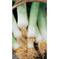 Leek (Organic) Seeds - Musselburgh