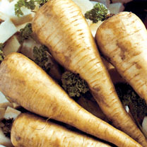 Image of Parsnip (Organic) Seeds - Tender and True