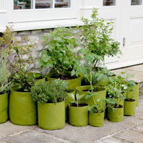Vigoroot Planters - 5 Litre