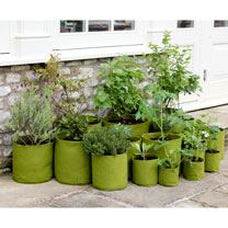 Vigoroot Planters - Pack of 3