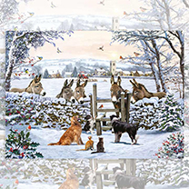 Donkey Encounter Jigsaw