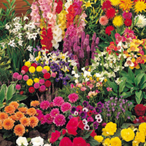 Summer Bulb Bumper Mix