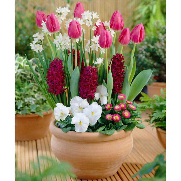 Container Companion Bulbs - Spring Palette