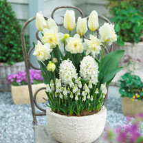 Container Companion Bulbs - Elegance