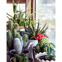Houseplant Seeds Urban Cactus Collection