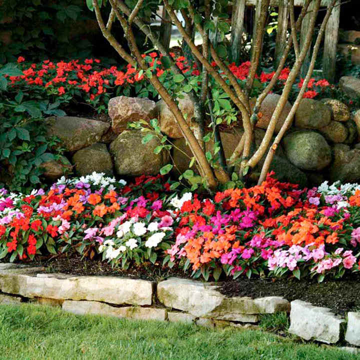Impatiens New Guinea Seeds - Florific Mixed