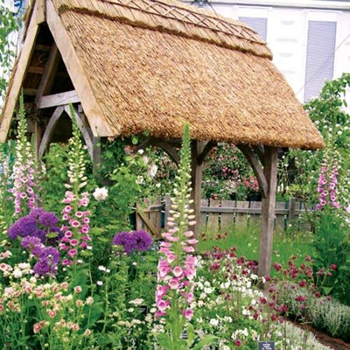 Cottage Garden Perennial Plants - Lucky Dip