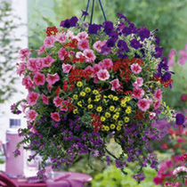 Bumper Basket Mixed Plants