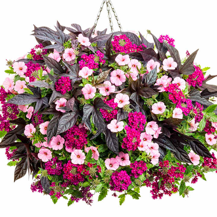 How to Plant Beautiful Flower Hanging Baskets ( & 20+ Best ...