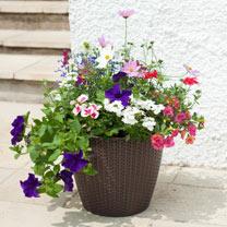 Large Rattan Effect Plant Pot - 12