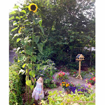 Click to view product details and reviews for Sunflower Seeds Giraffe.