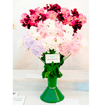 Click to view product details and reviews for Sweet Pea Seeds Showbench Mix.