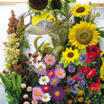 Click to view product details and reviews for Bird Attracting Seeds Mix.