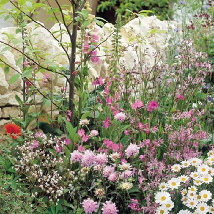 Wild Flower Seeds - All Seasons Mix