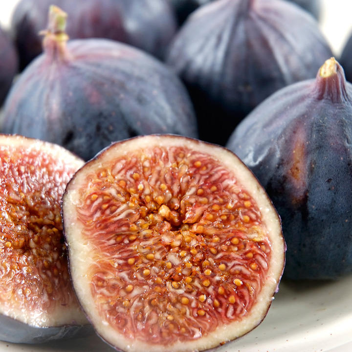 Fig Plant - Brown Turkey