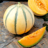 Melon Grafted Plants - F1 Alvaro