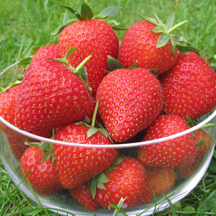strawberry plants vibrant order details
