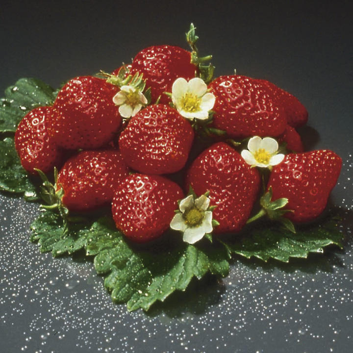 Strawberry Plants - Mara des Bois