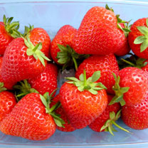 Strawberry Plants - Malling Allure