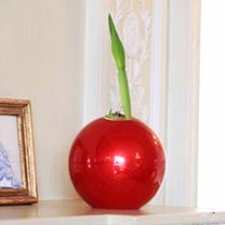 Amaryllis Bulb & Ball Planter
