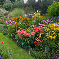 Cottage Garden Perennial Mix - Lucky Dip