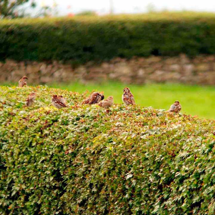 Wildlife Hedge Collection