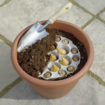 Plant-O-Tray Patio Pre-planted Bulbs - Tulip and Crocus