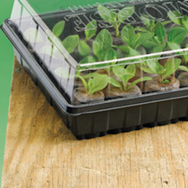 Image of 12 Cell Propagator with Cucumber Telegraph Seed