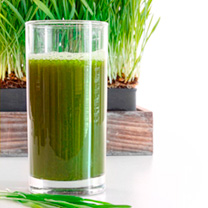 Wheatgrass Shoots Seeds