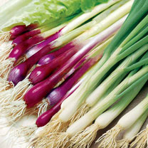 Onion (Salad) Seeds - Red & White Mix