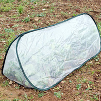 Pop-up Triangle Cloche - Large Polythene