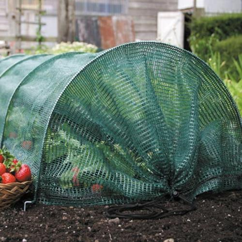 Easy Net Tunnel + 12 Strawberry Bare Root Plants