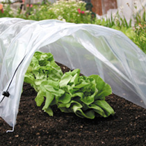 Easy Polythene Tunnel + 22 Lettuce Allsorts Plugs