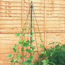 Garden Maypole Plant Support
