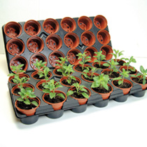 Growing On Pots and Trays, 15 Trays & 270 8cm Pots