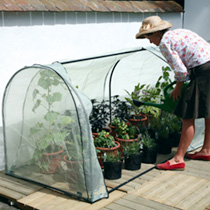 Year-Round Grower System