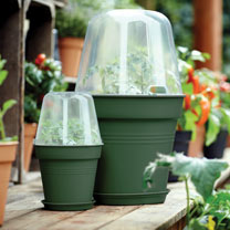Leaf Green Grow Pot 30cm + Bell Cover + Saucer