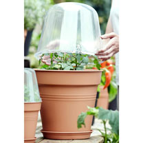 Grow Pot 30cm + Bell Cover + Saucer (3 Sets)