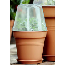 Grow Pot 17Cm + Bell Cover + Saucer (3 Sets)