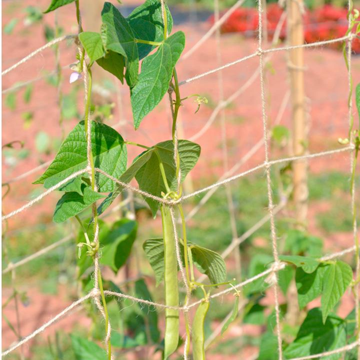 Biodegradable Netting