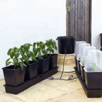 'Octogrow' Self-watering Growing System