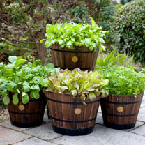 Wooden Barrel Planter SMALL - Burnt Oak (Pair)