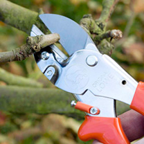 Anvil Secateurs - Standard