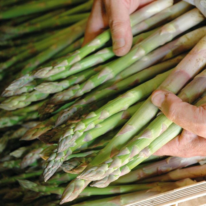 Asparagus Crowns - Guelph Millennium