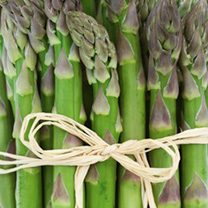 Asparagus Plants - Collection