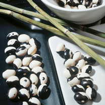 Bean (Dwarf French Kidney) Seeds - Yin Yang