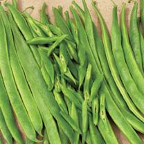 Bean Runner (Organic) Seeds - Scarlet Emperor