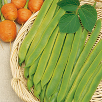 Bean (Runner) Seeds - Hestia
